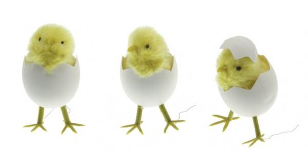Kücken in Ei