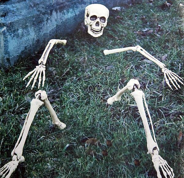 Skelettteile für Rasendekoration